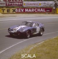 ******** A Cobra Daytona Ford, Le Mans, France, 1965.